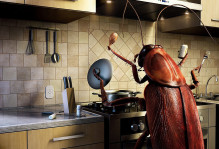 insect-cooking-21231-1920x1080